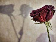 Flower-Pic-23175