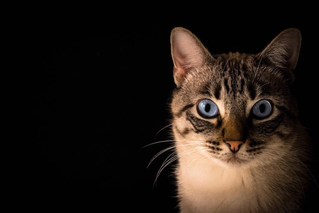 superstitions cat