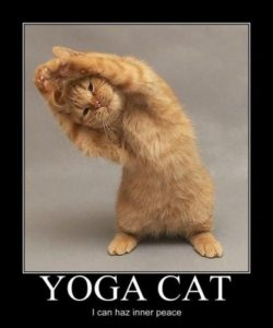 Funny-Yoga-Cats-1