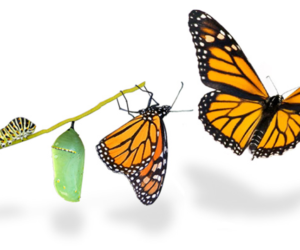 butterfly metamorphosis, being a better version of yourself