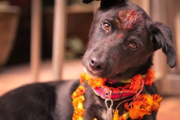 Kukur Tihar A Festival to honor dogs