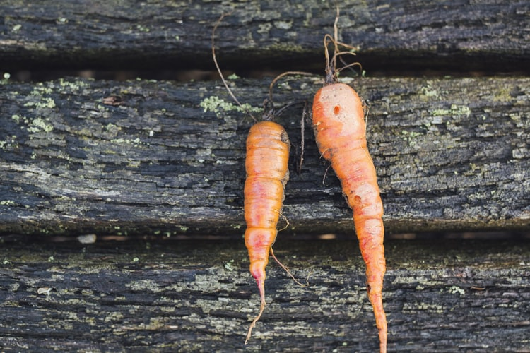 different-shapes-of-carrot organic farming